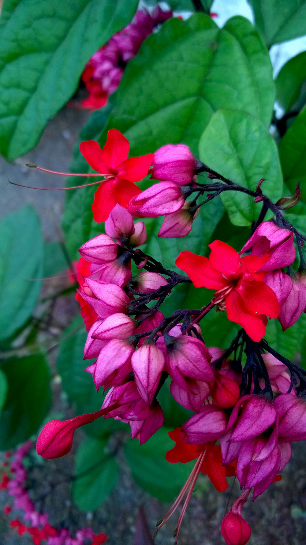 11_flores_barra_na_tijuca