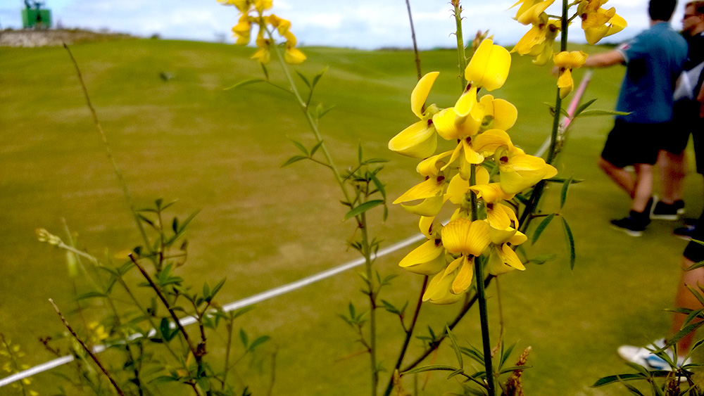 93_golf